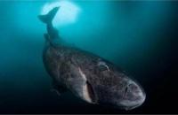 2016十大动物界的神奇发现 让人感叹大自然的神奇