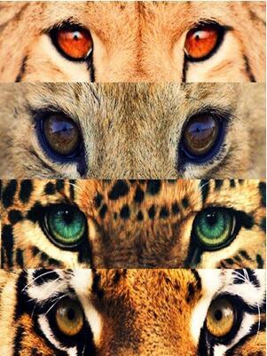 为什么一般人的眼睛是在一个平面上 而动物们却是长在