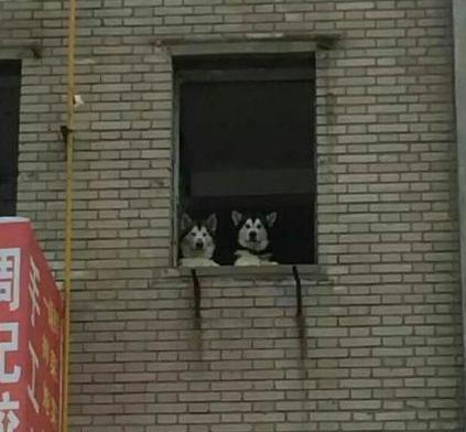 我一生也不会忘记周记饺子馆楼上的那对狗男女...
